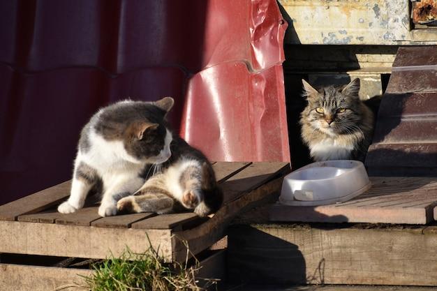 Gatti senza tetto sulla veranda. due gatti di strada affamati