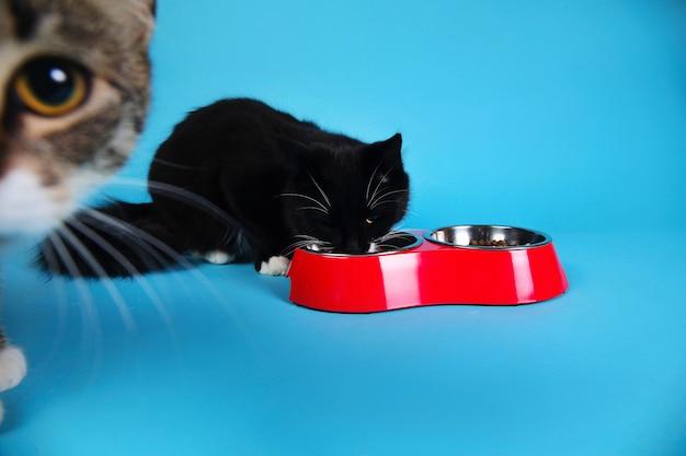 Gatti svegli che mangiano da una ciotola rossa