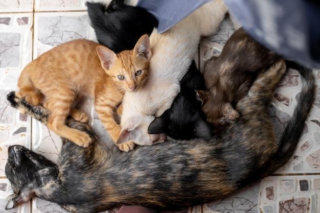 Gattini che succhiano il latte.