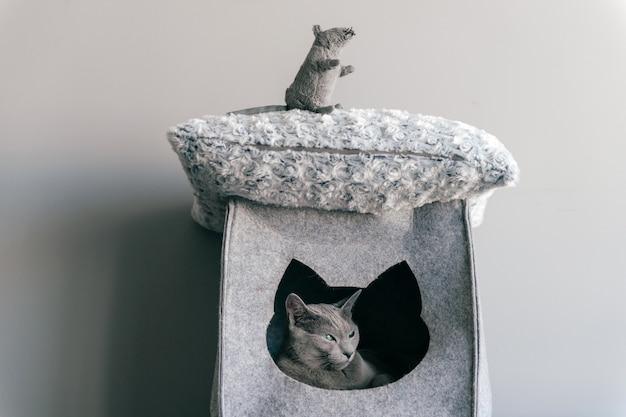 Gattino adorabile che gioca con il topo