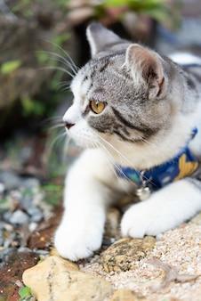 Gattino adorabile con bellissimi occhi gialli che indossa un collare per giocare in sicurezza nel giardino esterno