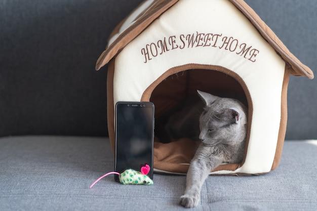 Gattino adorabile con lo smartphone che si rilassa nella casa del gatto.
