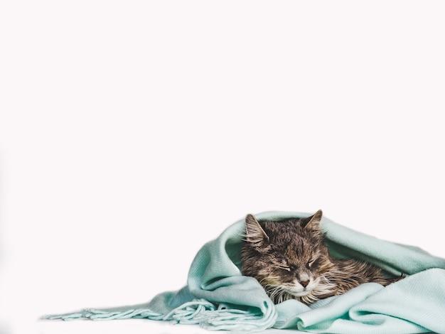 Gattino affascinante avvolto in una sciarpa