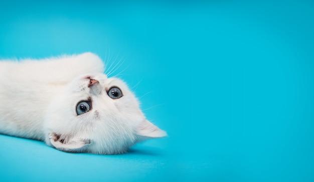 Gattino bianco allegro su una priorità bassa blu