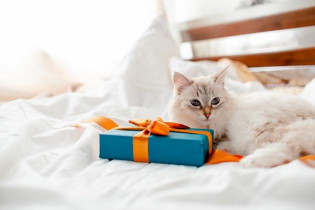 Gattino birichino con regali, fiocchi e nastri. vista orizzontale superiore. copyspace di concetto del nuovo anno e di natale