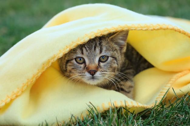 Gattino carino in una coperta gialla
