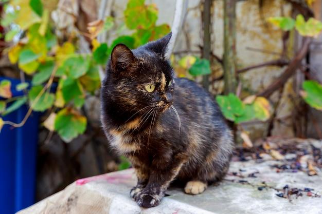Gattino carino nero seduto sul tavolo