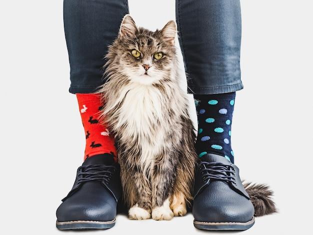 Gattino carino, scarpe eleganti e calzini luminosi