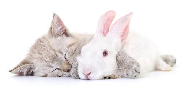Gattino che gioca con il coniglio