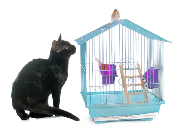 Gattino che gioca con l'uccello