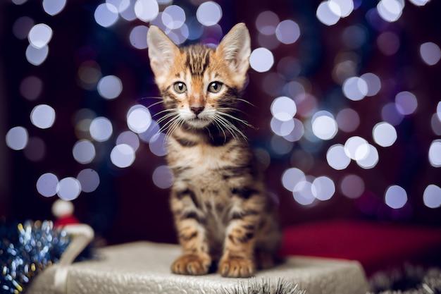 Gattino che si siede su un contenitore di regalo con il fondo del bokeh