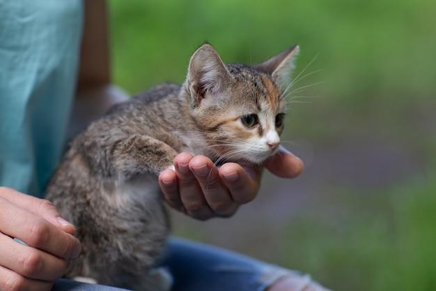 Gattino colorato nelle mani della natura