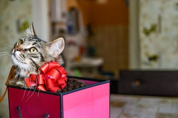 Gattino divertente in regalo rosa. confezione regalo rosa in cui si siede un gattino con un fiocco rosso. accettare il concetto di doni