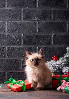 Gattino divertente vicino e scatole regalo