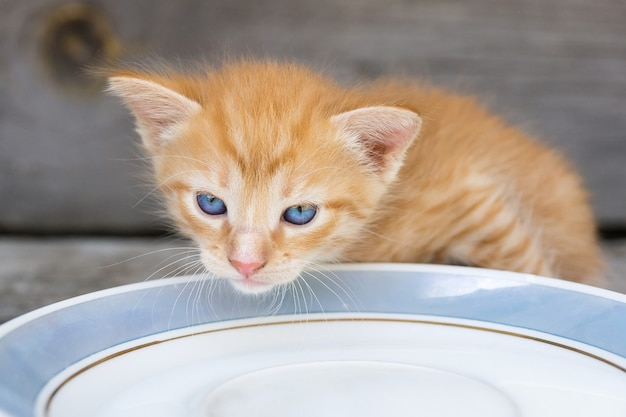 Gattino gira latte