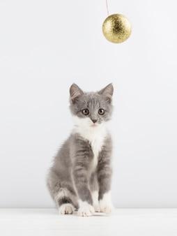 Gattino grigio sveglio che gioca con un giocattolo di natale.