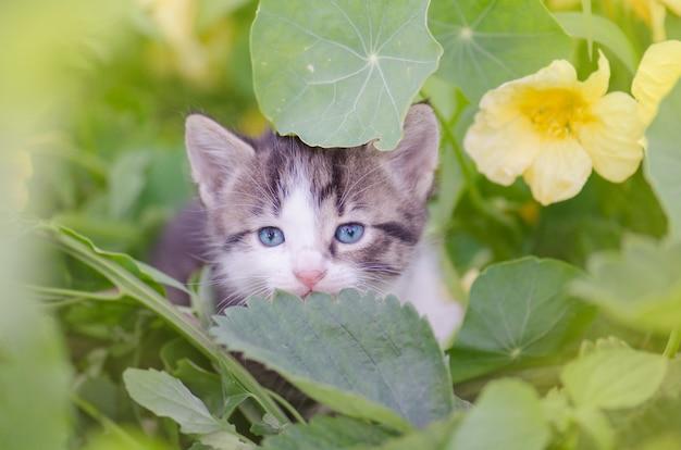 Gattino in giardino con fiori sullo sfondo