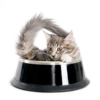Gattino in una ciotola di cibo per cani. su bianco.