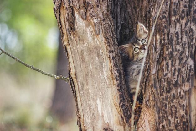 Gattino lanuginoso da solo nella cavità di un albero in estate