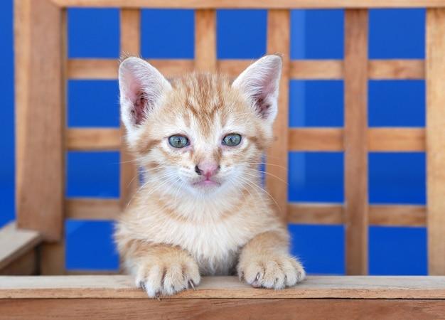 Gattino nel cestino di legno