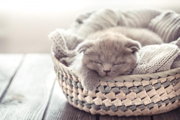 Gattino nel cestino