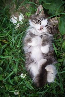 Gattino sdraiato sull'erba nella parte posteriore
