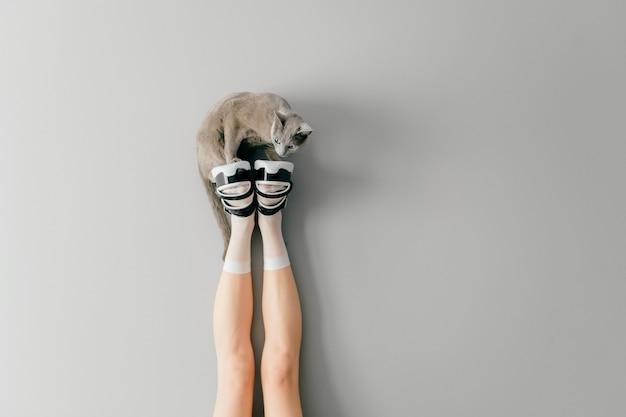 Gattino seduto su gambe femminili in calze bianche e scarpe alla moda