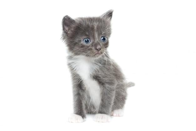 Gattino su bianco