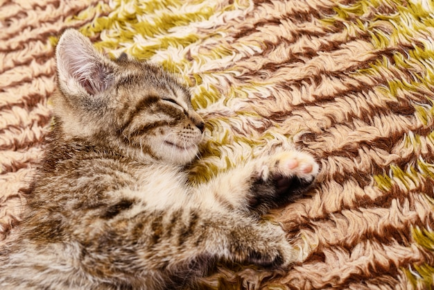Gattino su sfondo di tessili