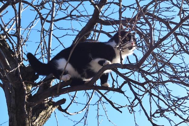 Gattino su un ramo di albero guarda il mondo