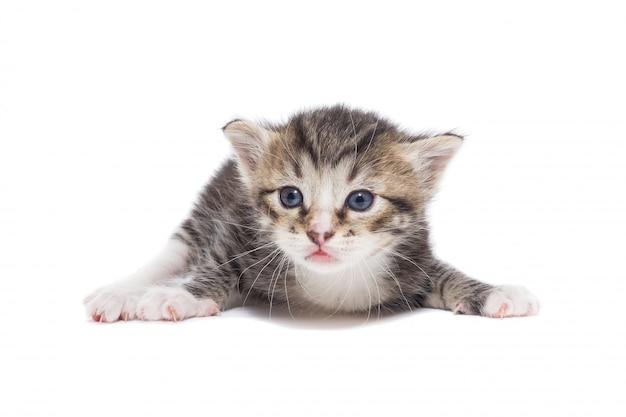 Gattino su uno sfondo bianco