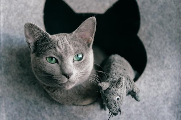 Gattino sveglio che divide la sua casa con il topo