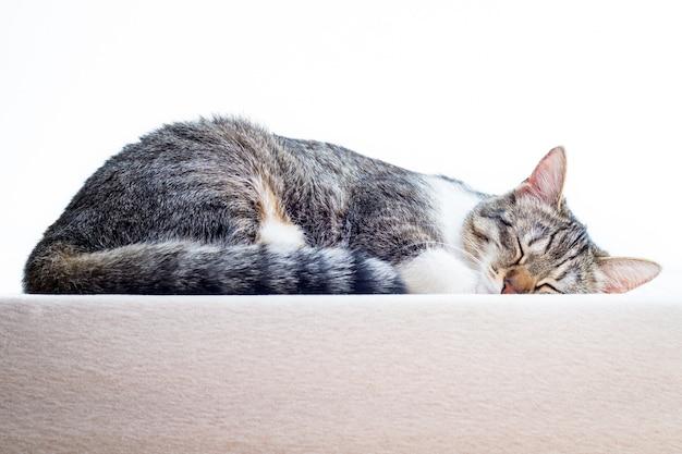 Gattino sveglio che dorme sul materasso a casa