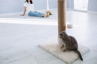 Gattino vicino al tiragraffi