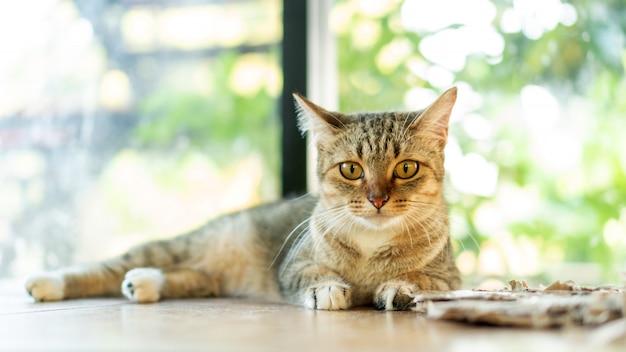 Gatto a strisce grigio che si trova nella stanza.