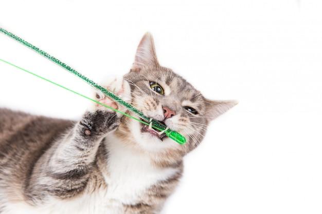 Gatto a strisce grigio giocoso che rosicchia giocattolo verde su fondo bianco.