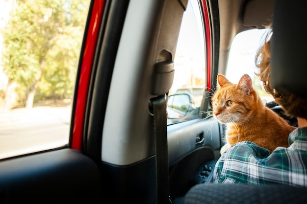 Gatto adorabile di vista posteriore che osserva sull'automobile della finestra