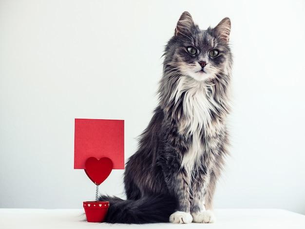 Gatto affascinante e peloso