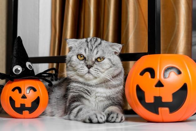 Gatto al festival di halloween.