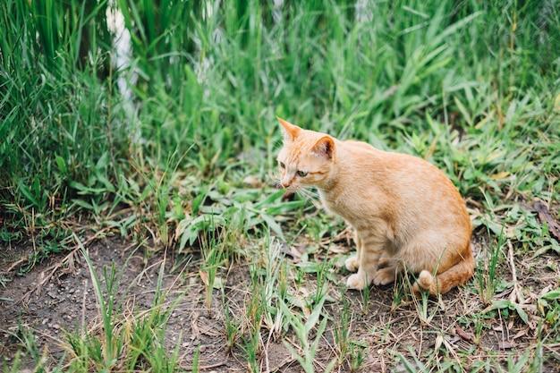 Gatto arancione si siede e guardando qualcosa