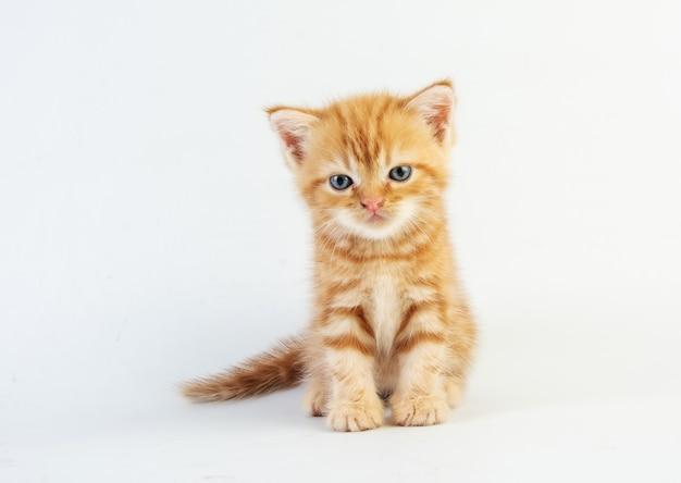Gatto bambino tabby kitten cute