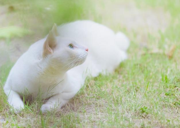 Gatto bianco che si siede nell'erba, concetto dell'animale domestico