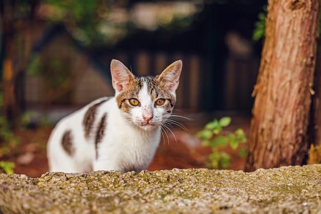 Gatto bianco della via che fissa nella macchina fotografica