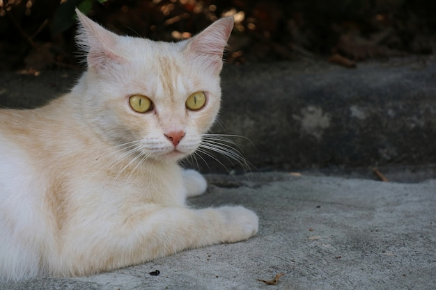 Gatto bianco e arancione sveglio solo che sembra meraviglia sul pavimento di cemento