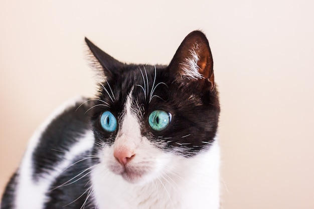 Gatto bianco e nero con grandi occhi verdi distoglie lo sguardo.