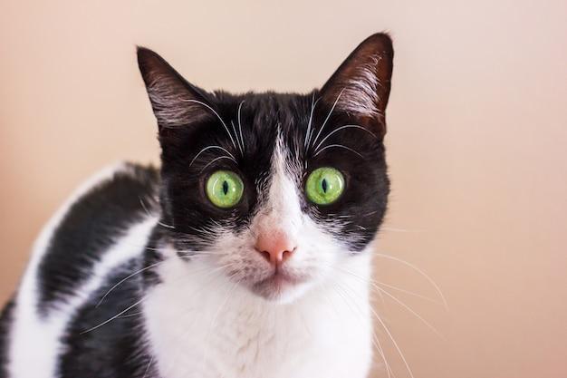 Gatto bianco e nero con grandi occhi verdi sta guardando dritto nella fotocamera.
