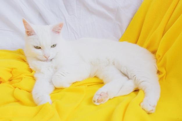 Gatto bianco si trova su un divano plaid giallo.