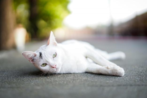 Gatto bianco sveglio che pone sulla fine concreta della via in su.