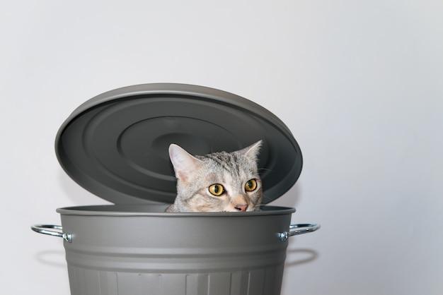 Gatto carino nascondersi in un secchio grigio con coperchio