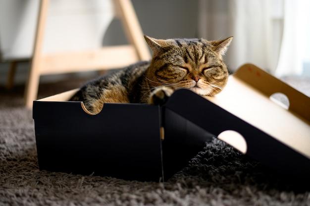 Gatto che dorme in un gatto di scatola di cartone si trova nel box pet sta per dormire lì